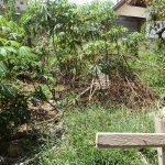bali-lovina-land-for-sale
