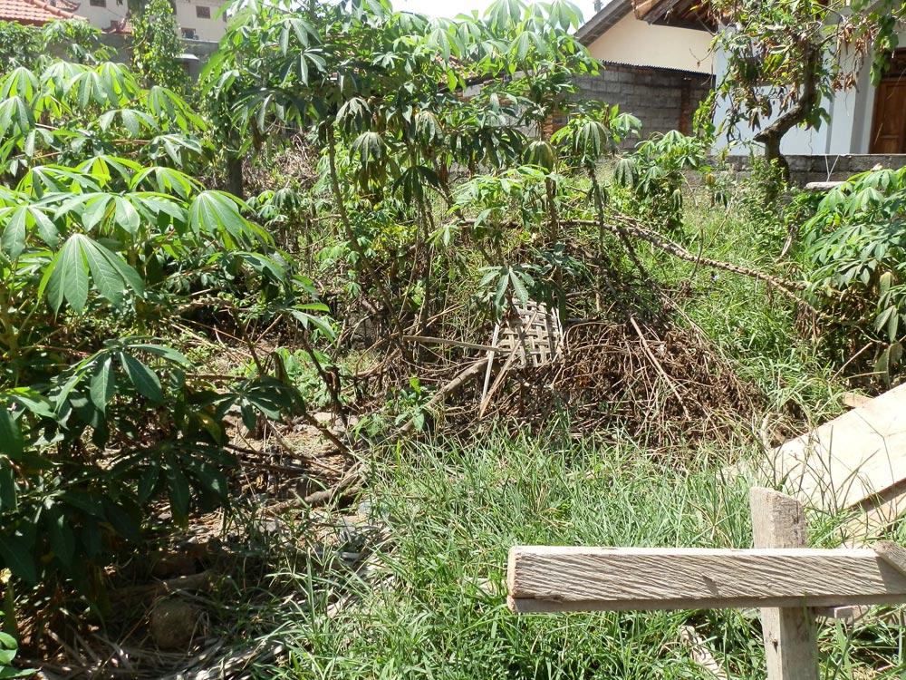 Lovina Bali Land for sale NB-L027