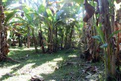 bali lovina town land for sale