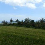 bali-land-for-sale-cheap