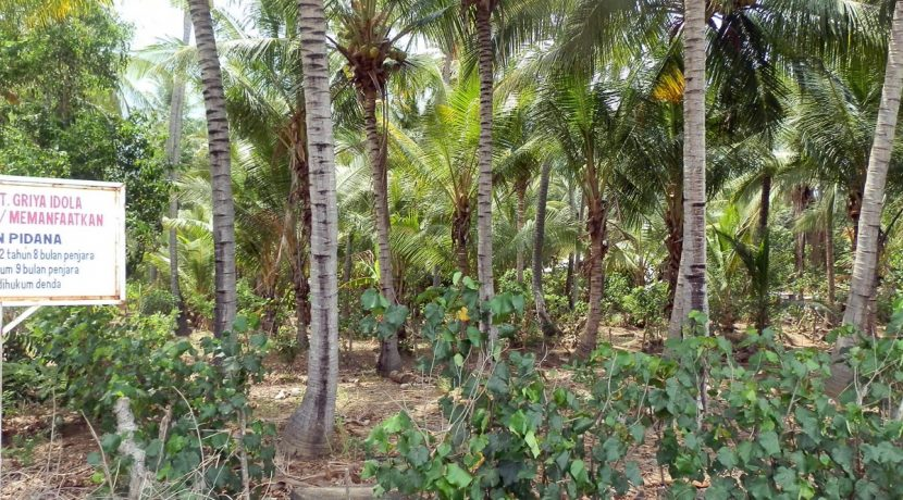 north-bali-beachfront-land-3