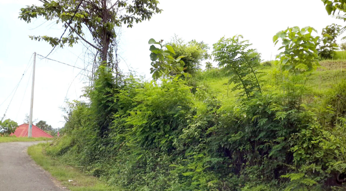north-west-bali-land-for-sale-118
