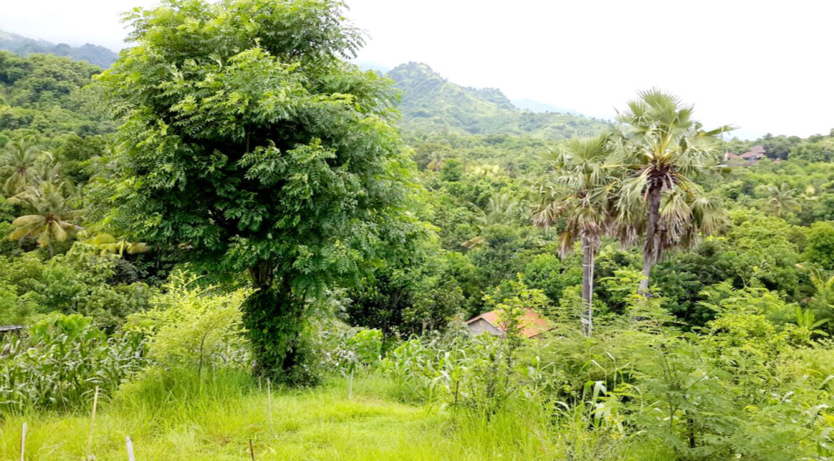 north-west-bali-land-for-sale-17