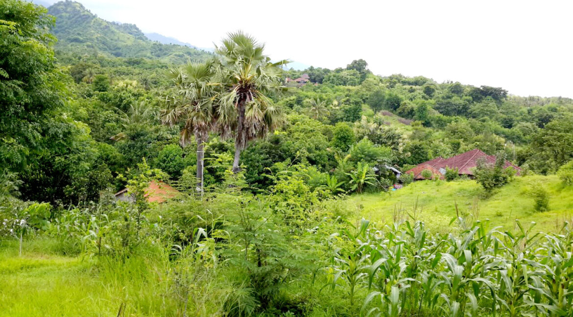 north-west-bali-land-for-sale-19