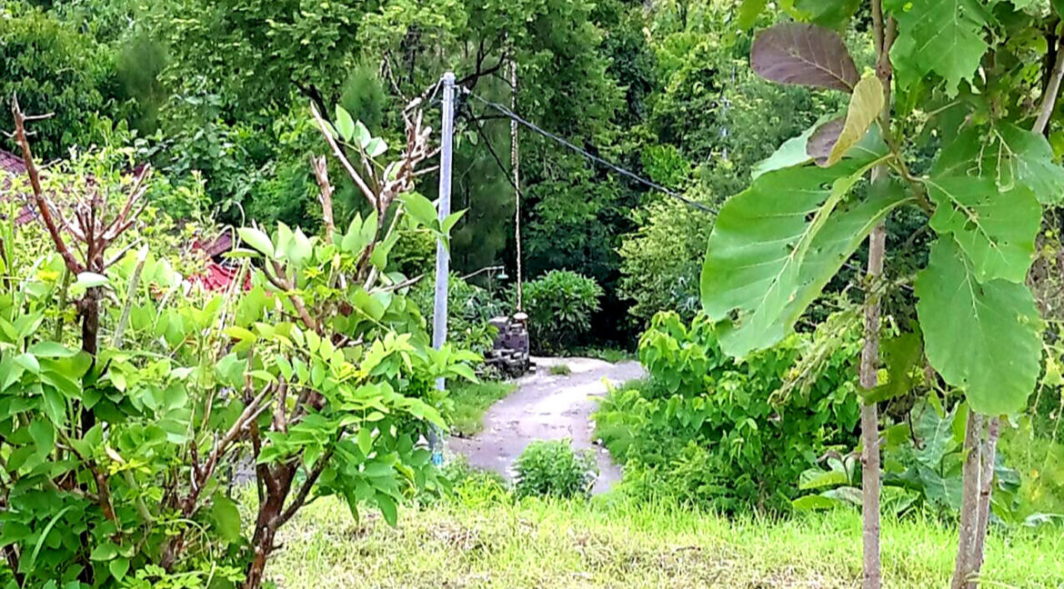 north-west-bali-land-for-sale-6