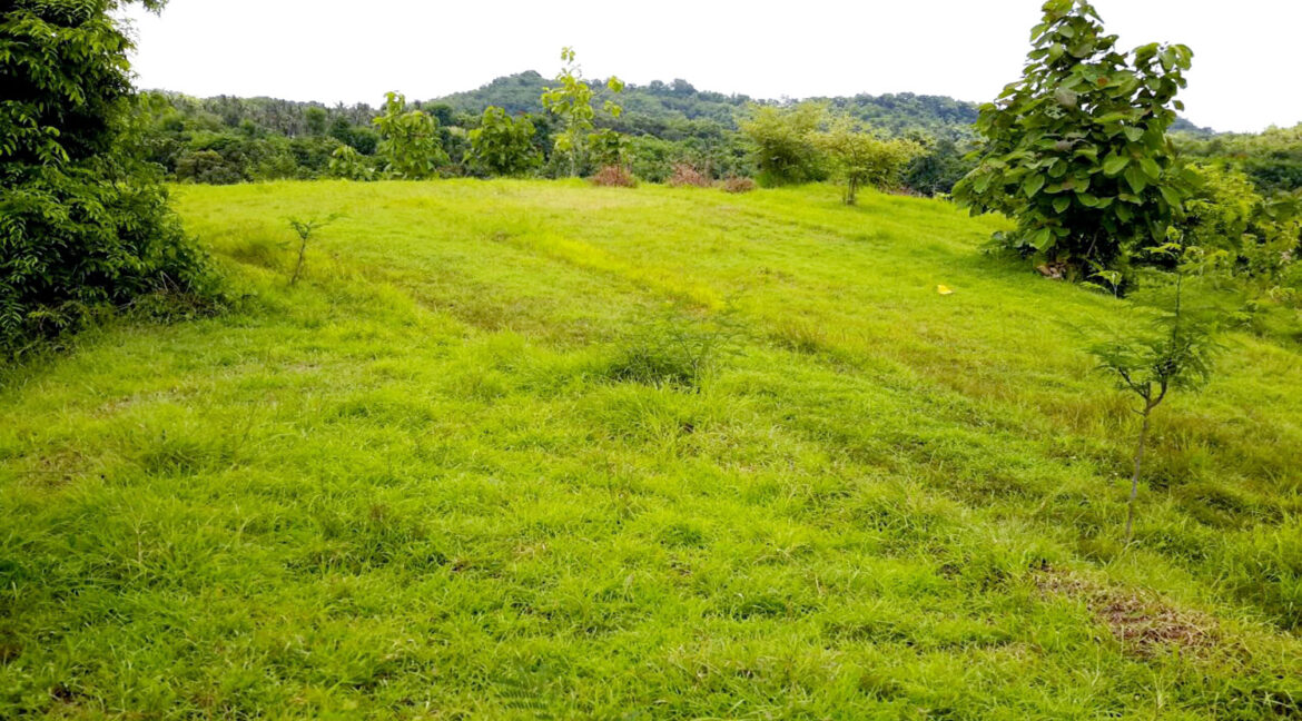 north-west-bali-land-for-sale-7