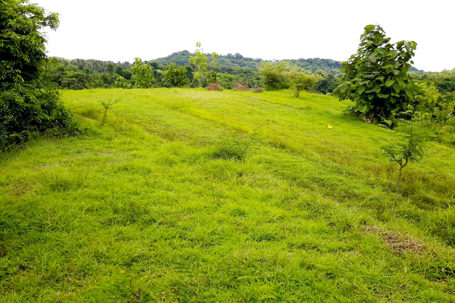 Bali Ocean View land for sale freehold