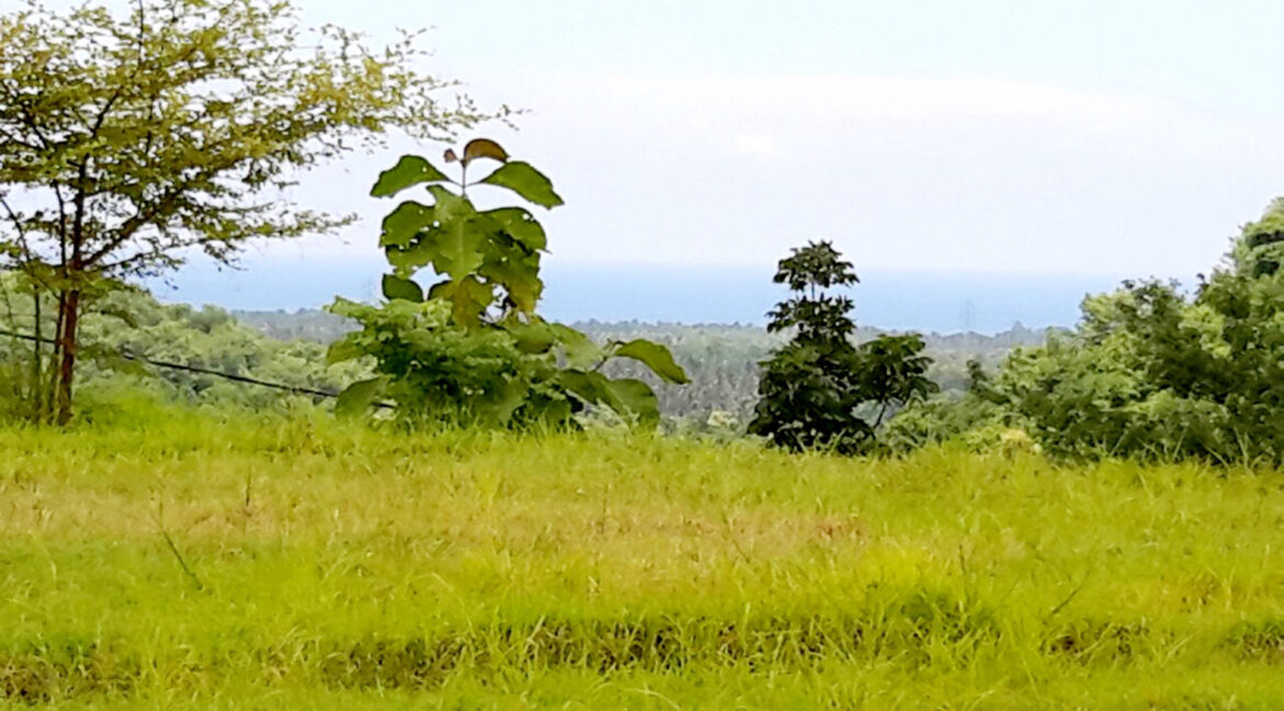 north-west-bali-land-for-sale-9